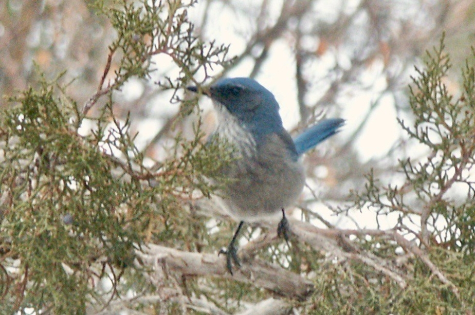 The Great BIBLE BirdCount